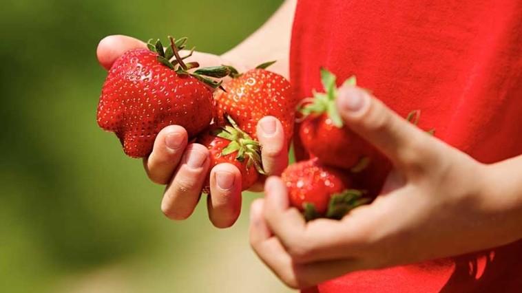 Dumitru CRUDU // Căpșunile alea stricate
