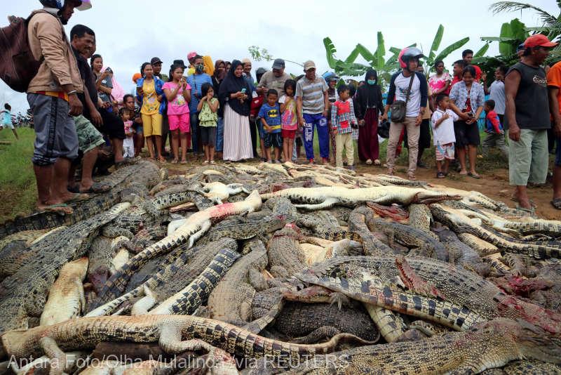 O mulţime furioasă a masacrat aproape 300 de crocodili