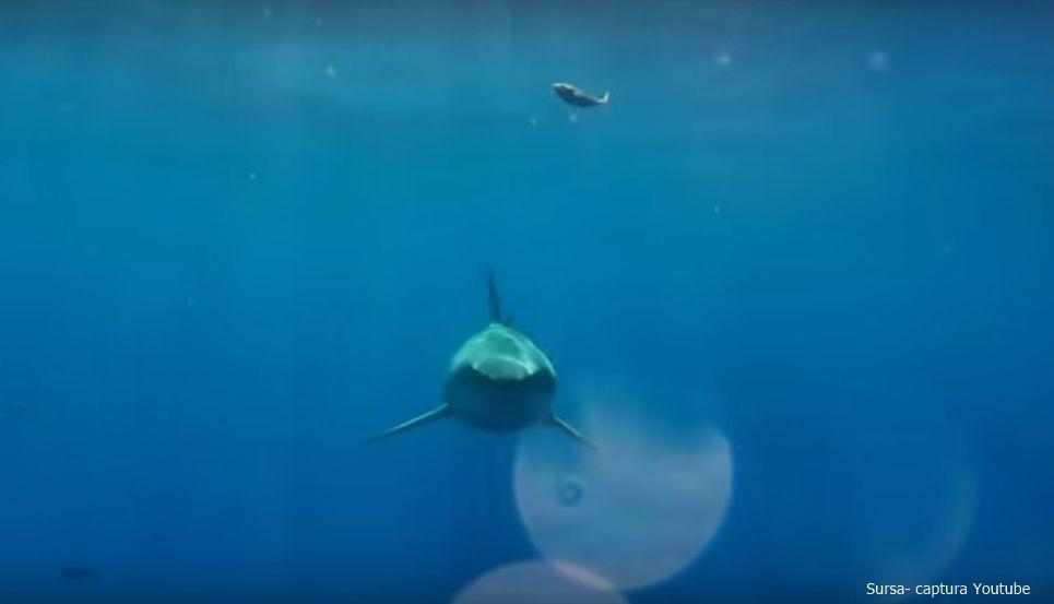 Cum este să fii muşcat de un rechin alb?