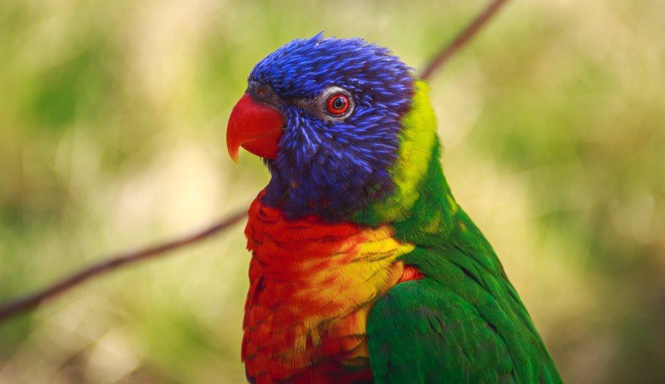 """Păsări """"afaceriste""""?! Papagalii pot lua decizii economice complexe pentru a scoate profit"""