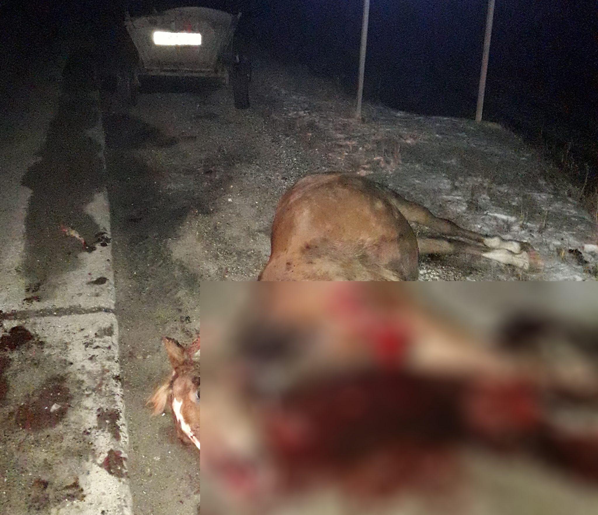 FOTO // Un automobil a lovit un atelaj la intrarea în satul Pelinia