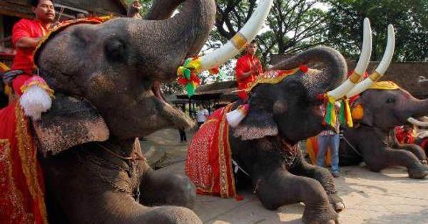 Țara în care elefanții aduc cadourile de Crăciun