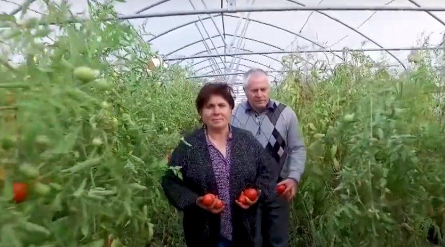 Firmă de legume din Drochia, lansată din fonduri europene