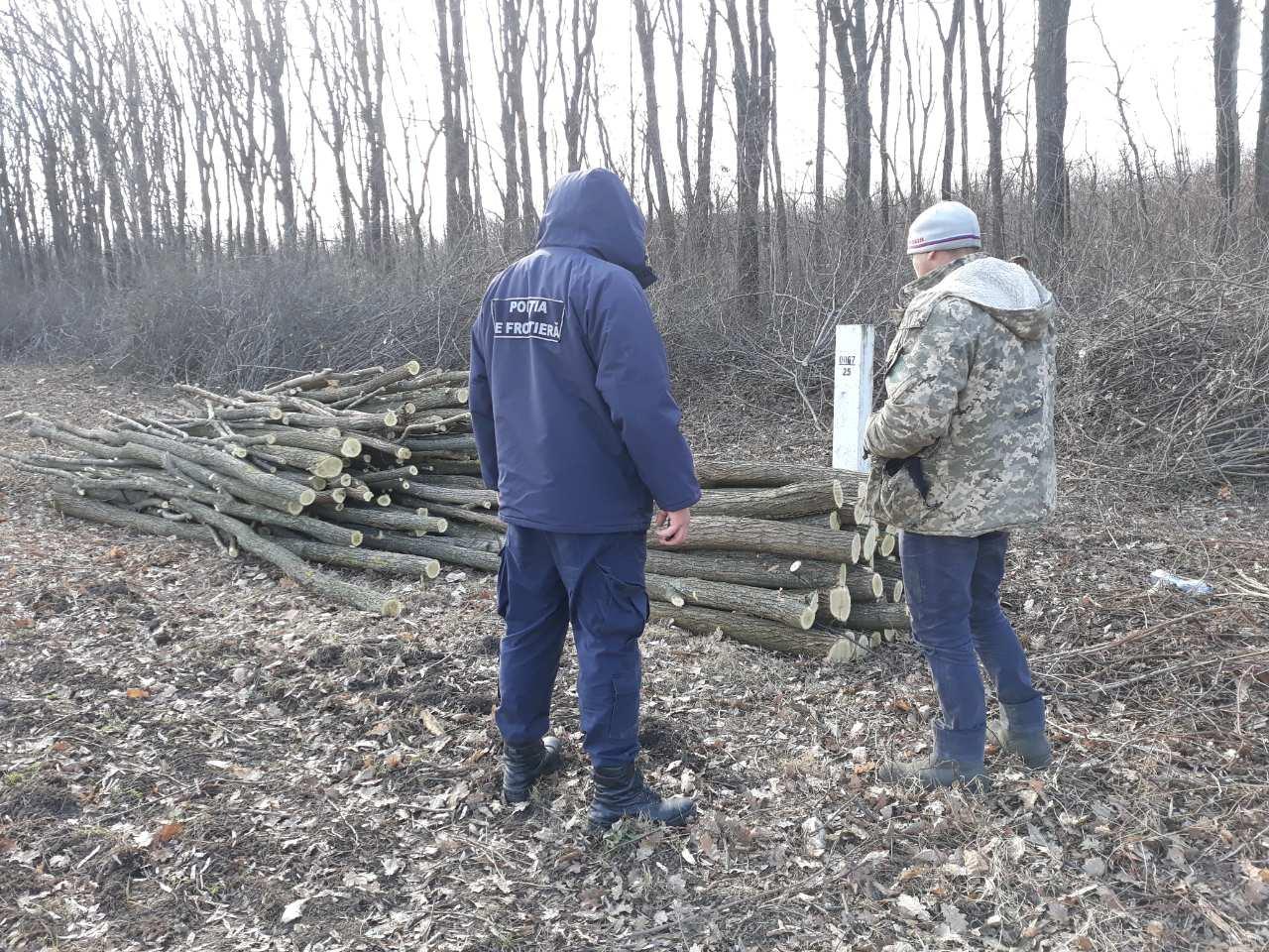 Tăiere ilicită de arbori, contracarată de polițiștii de frontieră din nordul țării