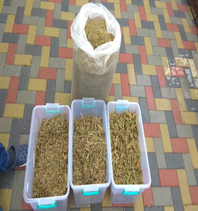 FOTO/VIDEO | Droguri în valoare de 8 milioane de lei confiscate de polițiști și procurori