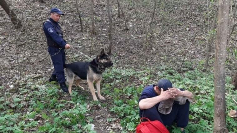 Un hoț care se ascundea într-o pădure din Soroca a fost găsit de Rex