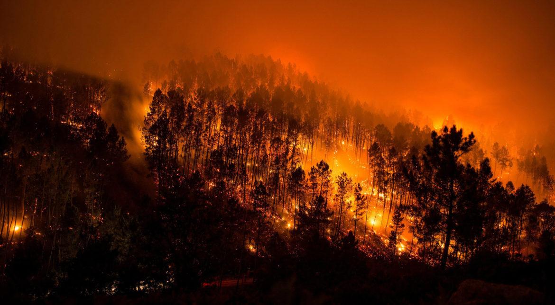 VIDEO | Un mort şi mii de oameni evacuaţi în urma unui incendiu de pădure în Coreea de Sud