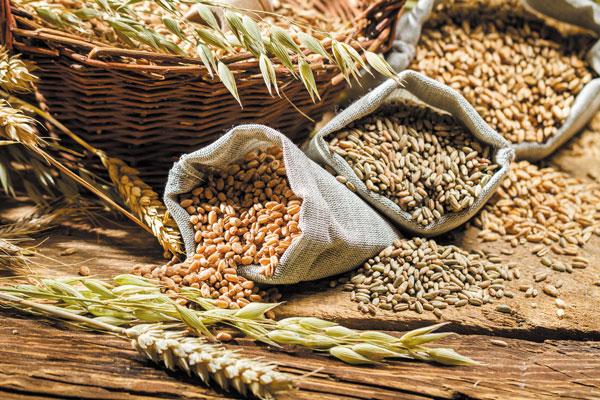 Strategie Grains și-a redus estimările privind producția de grâu și orz a Uniunii Europene