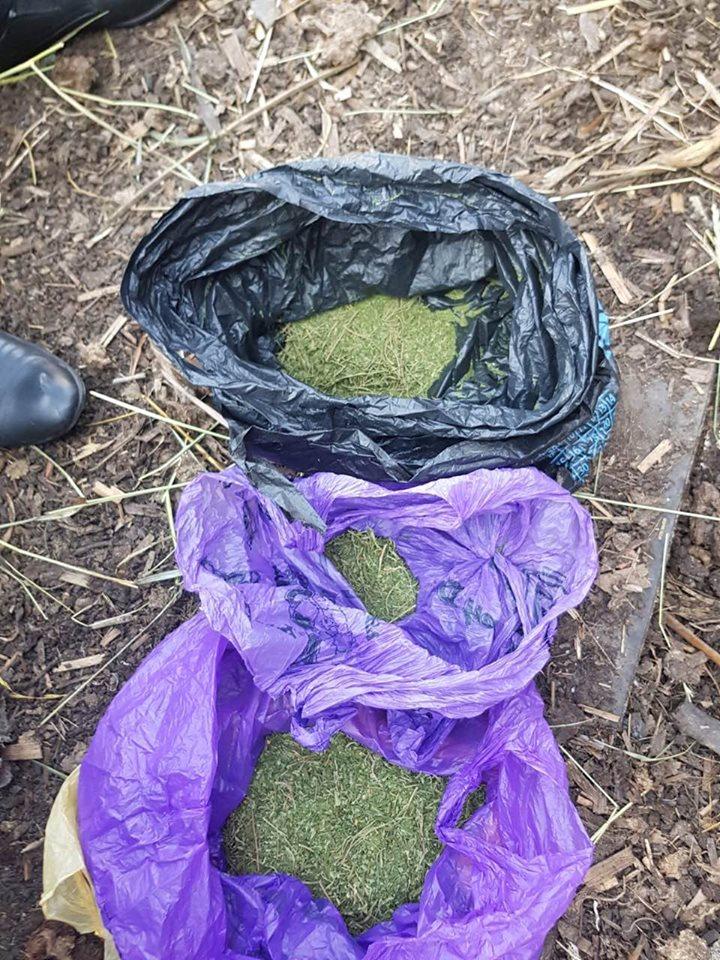 Doi bărbați din raionul Sîngerei au fost reținuți pentru comercializarea marijuanei