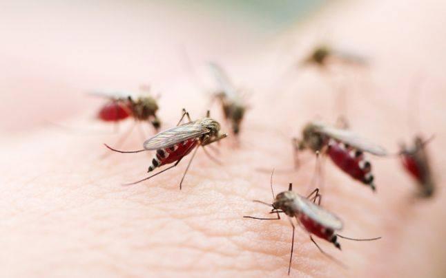 17 remedii naturiste care te ajută să scapi de muşte şi ţânţari