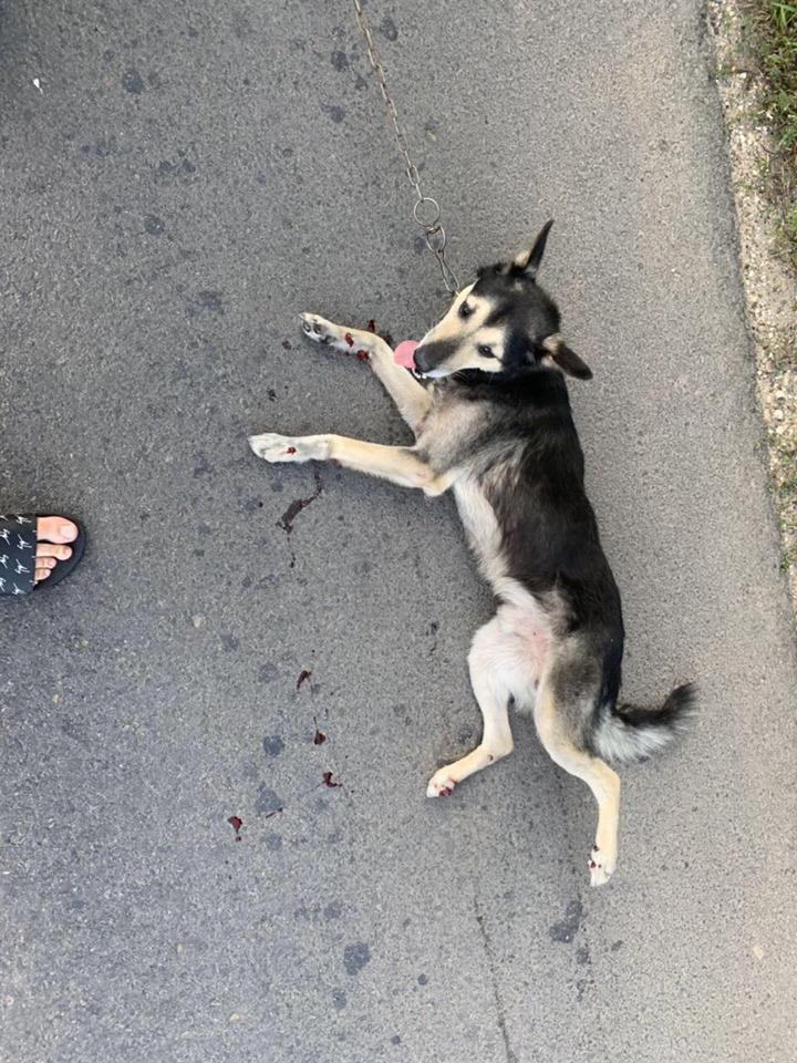 """Un preot din Anenii Noi """"a pedepsit"""" un câine legându-l de mașină și târându-l pe asfalt"""