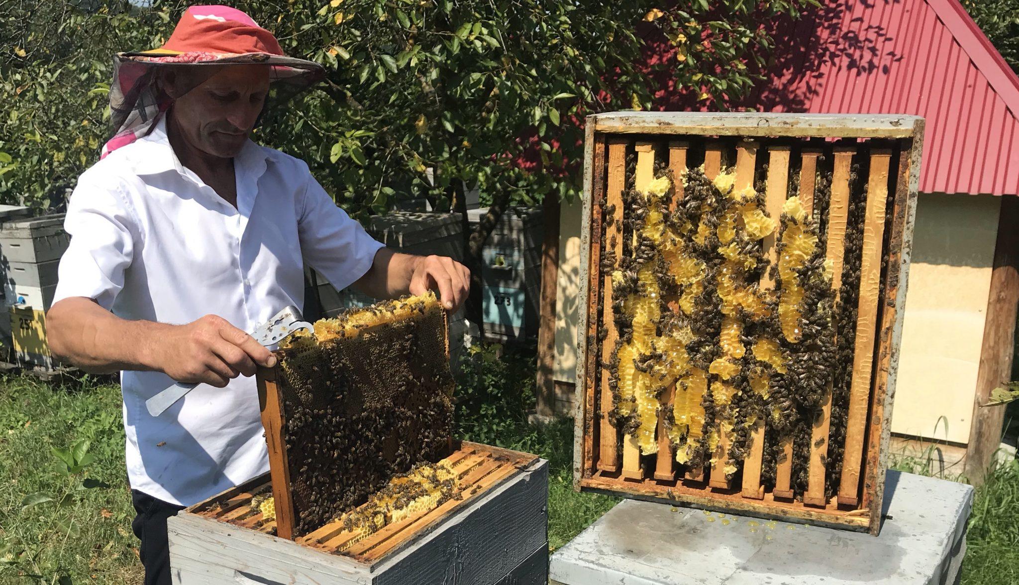 VIDEO | Afacerea de succes a apicultorului din Chișcăreni, Sîngerei care tratează, nu doar îndulcește