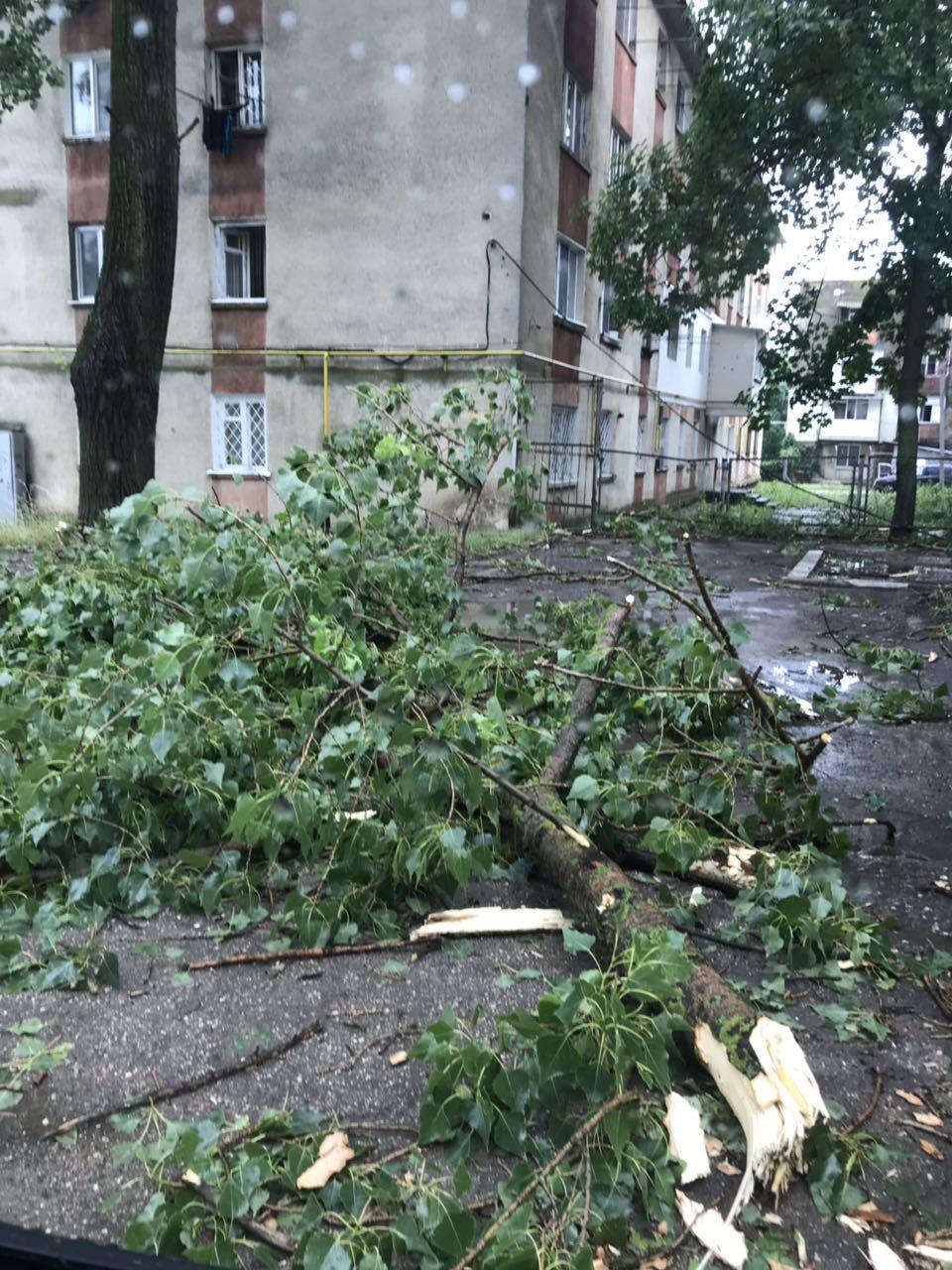 VIDEO | Ploaie torențială de 10 minute la Bălți: străzi inundate, copaci doborâți, fire electrice rupte și ambuteiaje