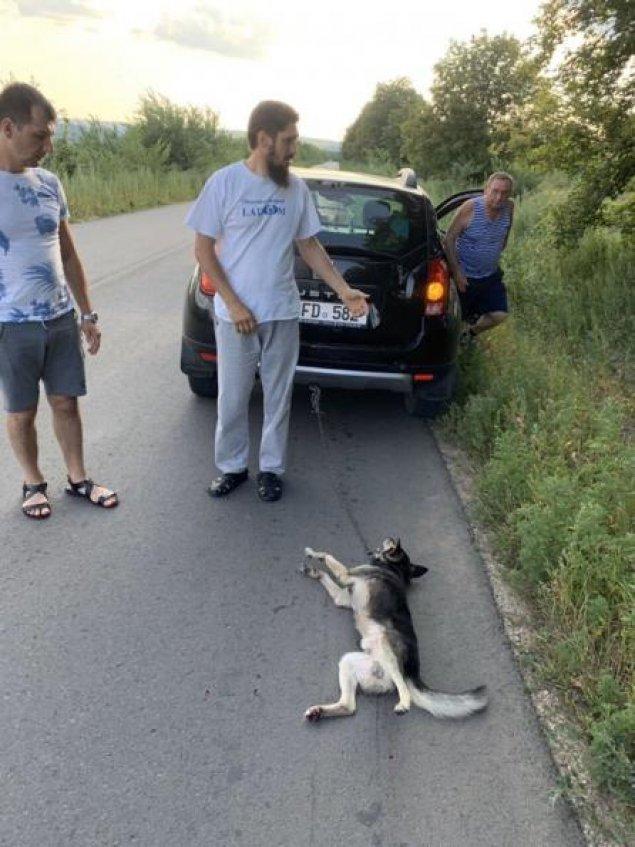 Câinele și-a cerut scuze de la părintele Văluță…