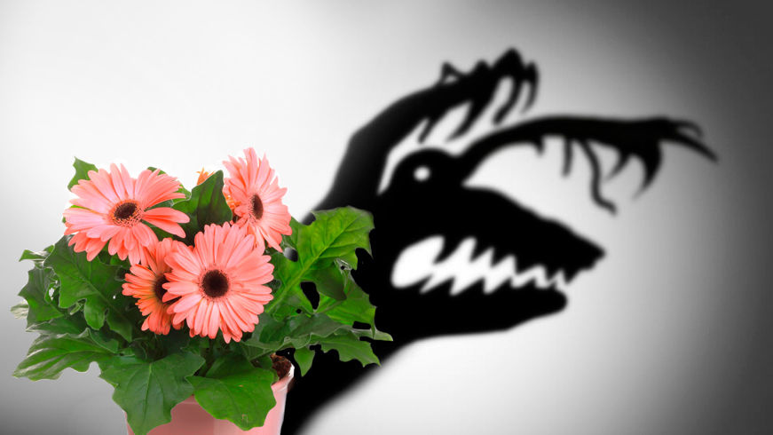 Токсичные комнатные растения