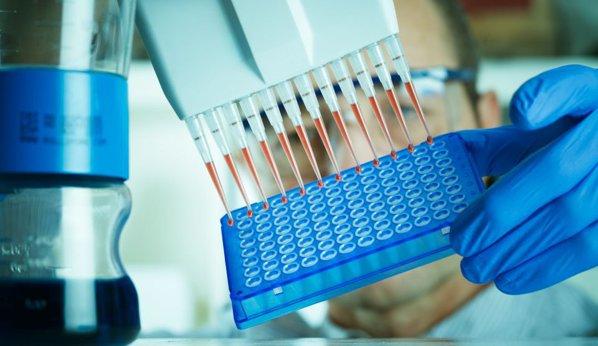 Japonia a aprobat primele experimente cu hibrizi om-animal