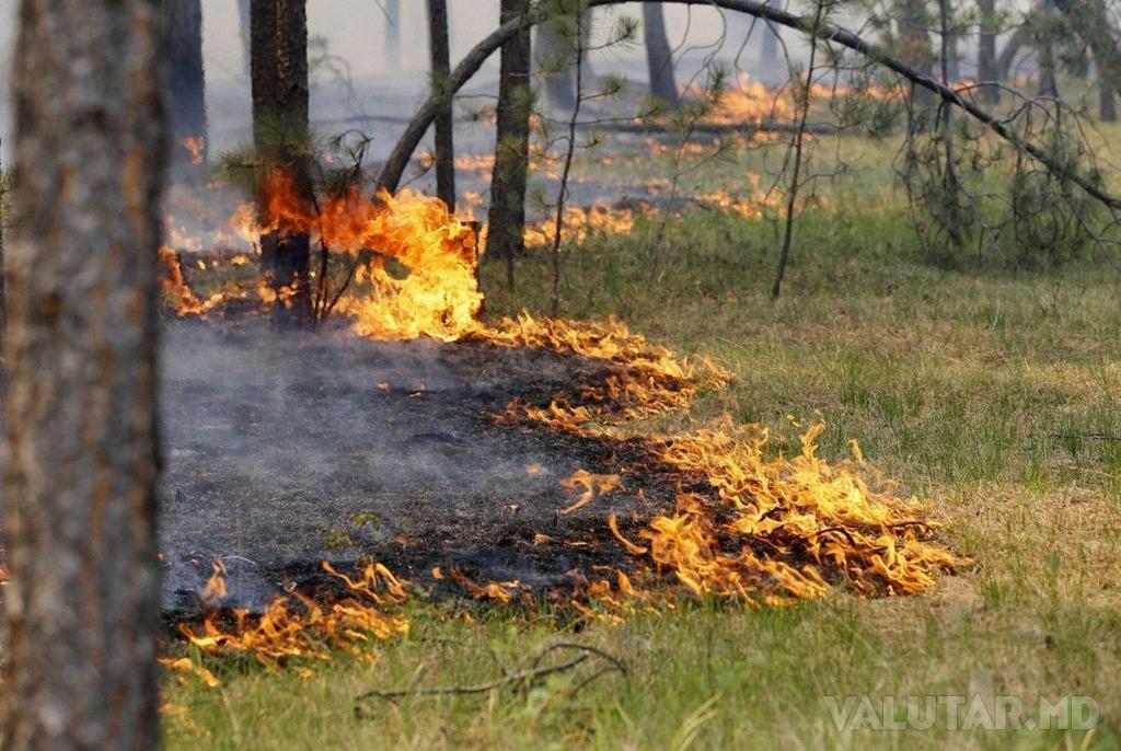 Синоптики предупреждают о возможных пожарах в Молдове
