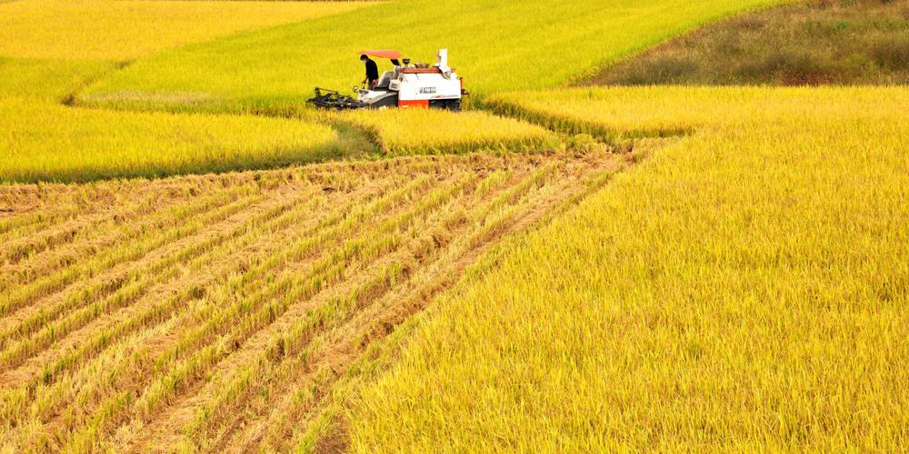 В Молдове начнется борьба с деградацией сельскохозяйственных земель