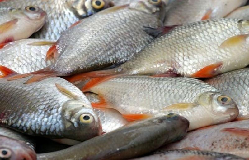 Zeci de loturi de pește, depistate cu paraziți