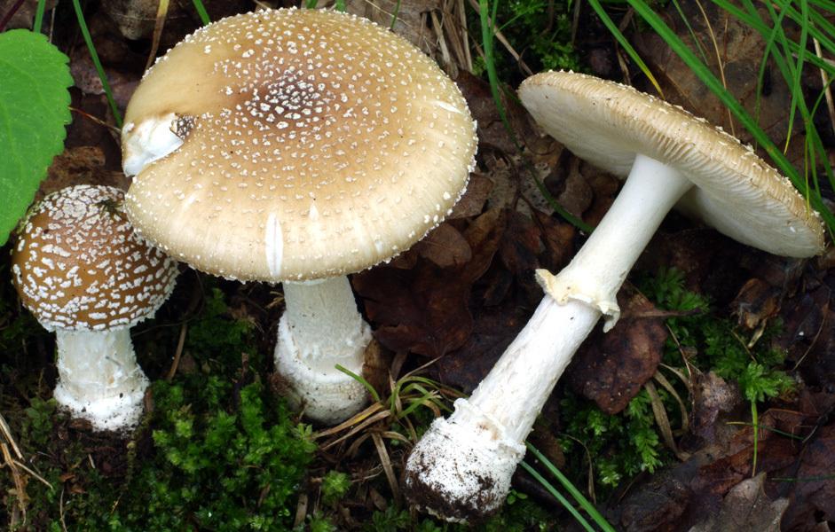 Intoxicație cu ciuperci în sudul țării: Cinci persoane au ajuns la spital