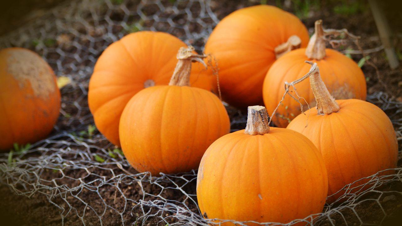 (Бес)полезные советы // Как символ хэллоуина может помочь организму
