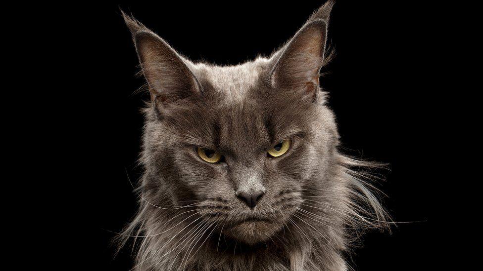 (Бес)полезные советы // Почему нам кажется, что кошки недружелюбны и высокомерны