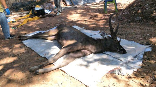 В желудке мертвого оленя в Таиланде нашли 7 кг мусора