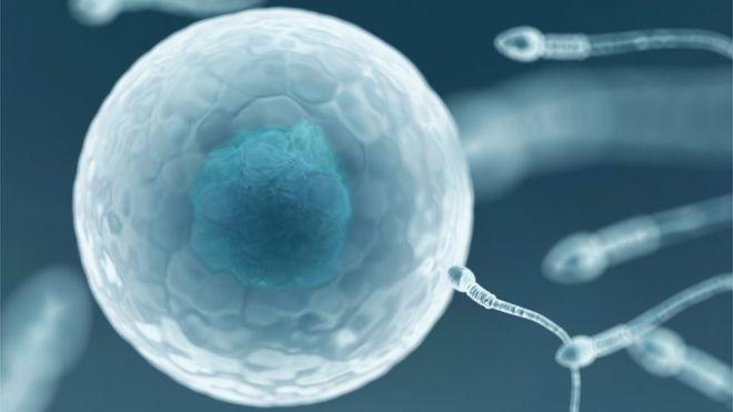 Первый в мире банк спермы доноров с ВИЧ открылся в Новой Зеландии