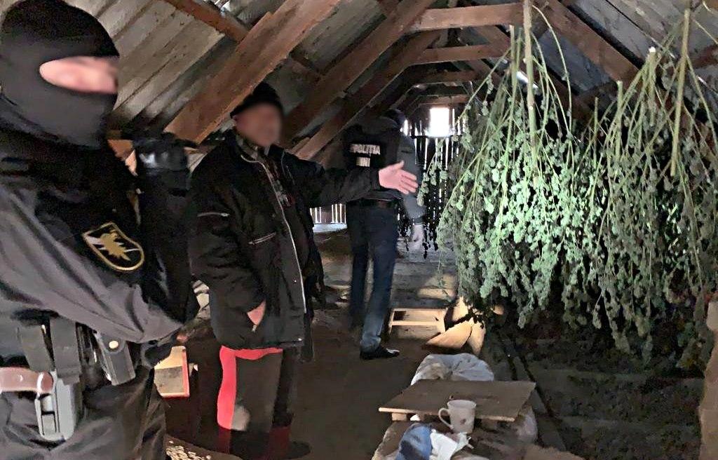 VIDEO | Полицейские изъяли 8 кг марихуаны у двух жителей Кагула