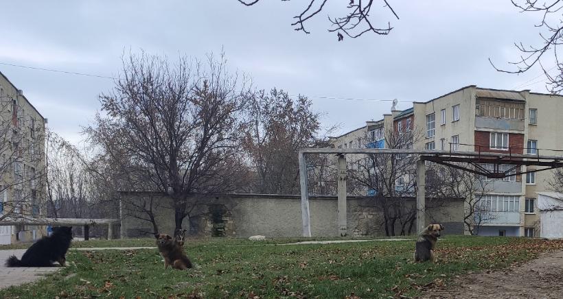 Видео | Услугу отлова бездомных животных в Бельцах отдадут приюту для собак