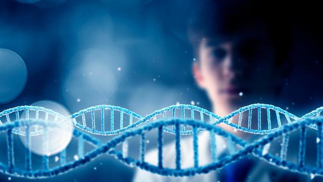 Генетики прогнозируют исчезновение мужского пола