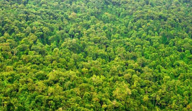 A fost descoperită cea mai veche pădure fosilizată din lume