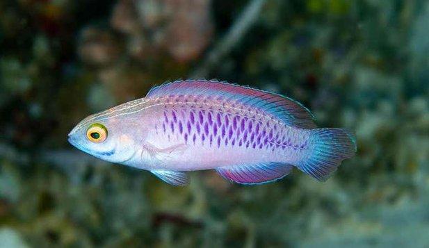 Peste 70 de specii de animale şi plante, descoperite în 2019 de savanţi