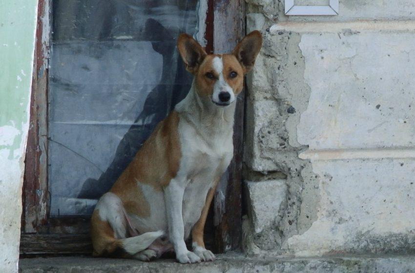 ВИДЕО | Почти 50 новых жертв бездомных собак в Бельцах всего за один месяц