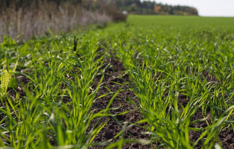 Фермеры обеспокоены теплой погодой этой зимой
