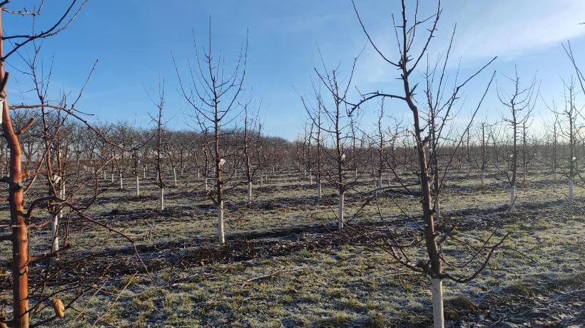 ВИДЕО | Нашествие мышей на севере Молдовы. Они угрожают плодовым деревьям