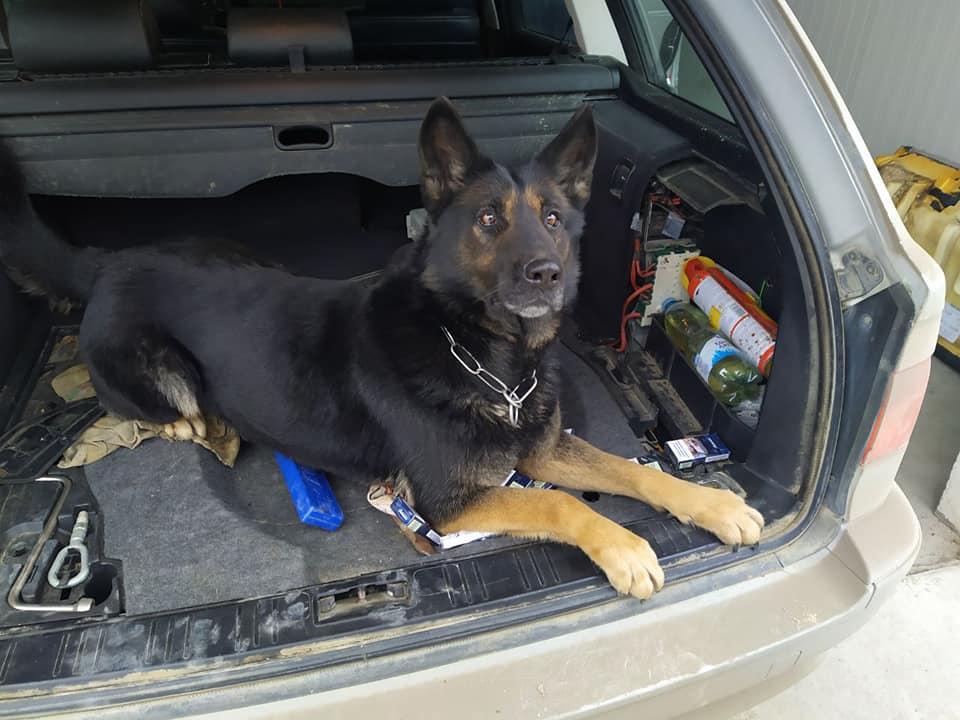 Trafic ilicit de țigarete deconspirat de un câine de serviciu în punctul de trecere Lipcani – Rădăuți-Prut.