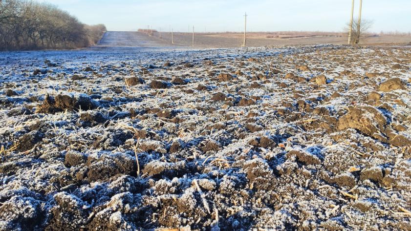 VIDEO   Fermierii din nordulțăriiar putea pierde aproape 750 de milioane de lei din cauza ierniicalde.Grâul, rapița și orzul sunt în pericol