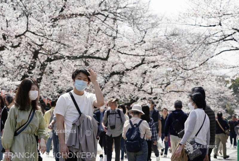 În pofida pandemiei, japonezii celebrează sărbătoarea florilor de cireș