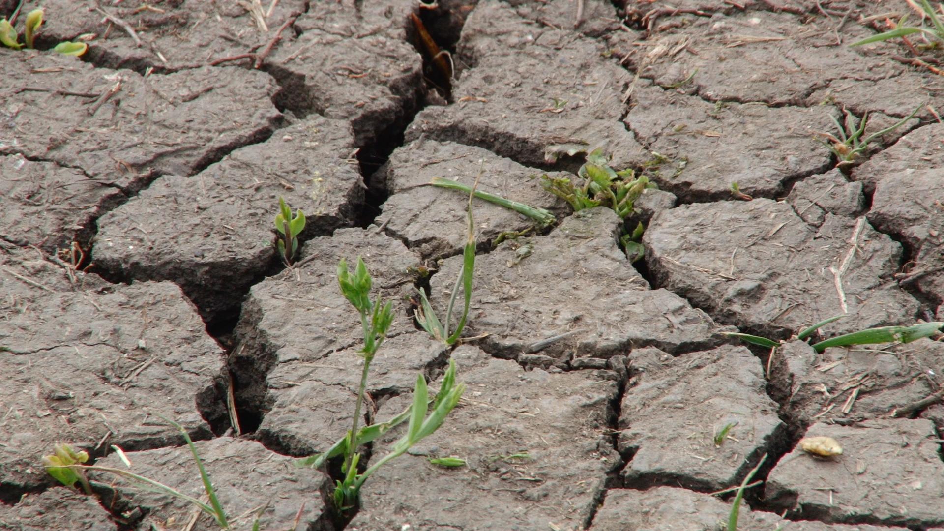 VIDEO | Nu e de ajuns COVID-19, Dumnezeu ne dă și secetă. Agricultorii: Dacă nu va ploua vom rămâne fără pâinică