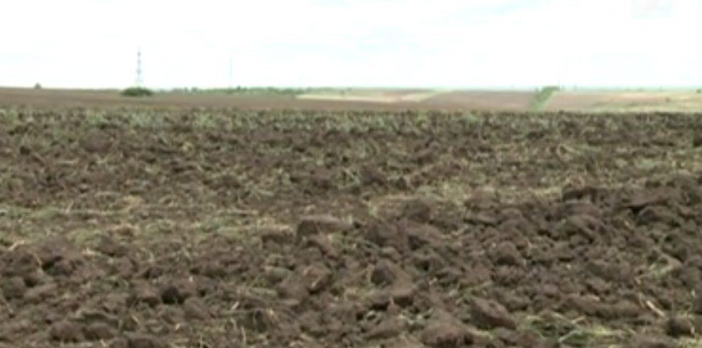 Фермер: Цены на пшеницу и посевной материал неизбежно вырастут
