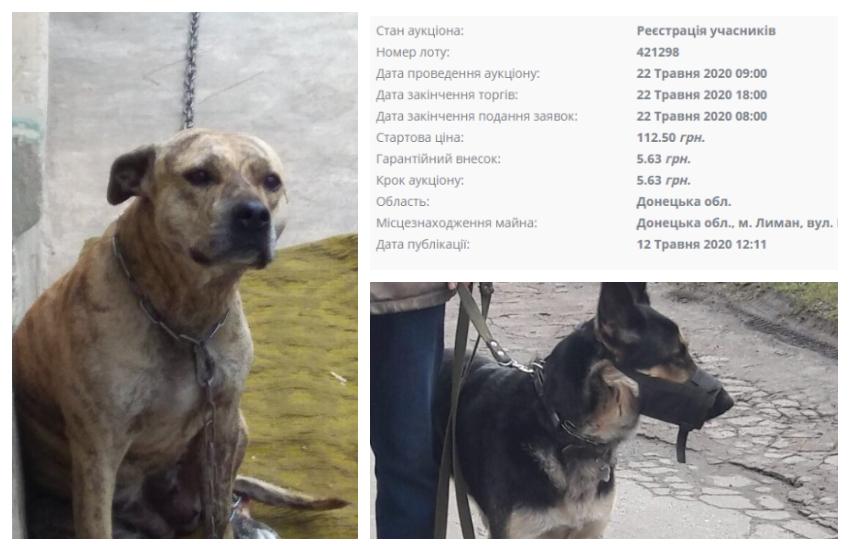 На Украине собак выставили на аукцион за долги хозяев