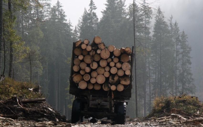 1500 человек подписали онлайн-петицию: они просят просят остановить незаконную вырубку молдавских лесов