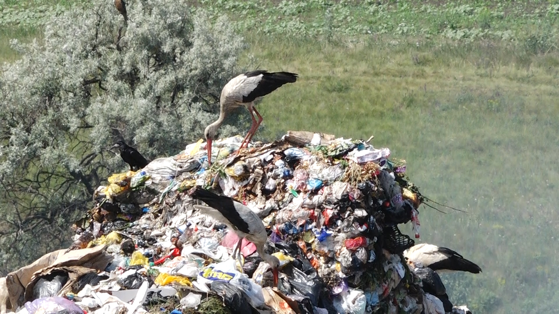 VIDEO   Pe lângă COVID, peste Bălți vine și criza gunoiului
